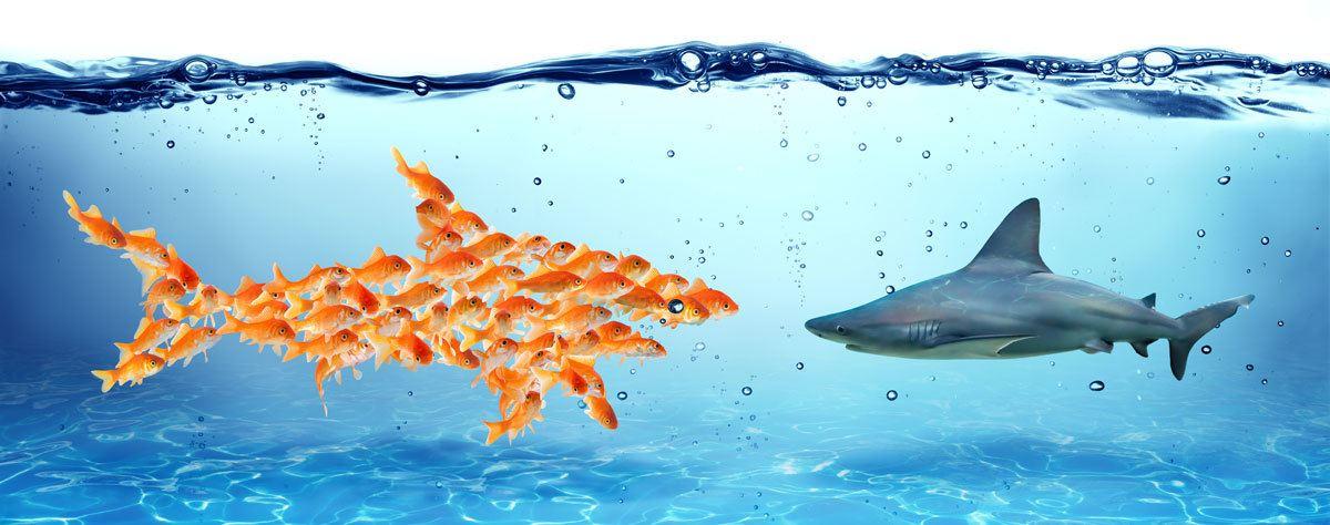 Hai ja kalaparvi
